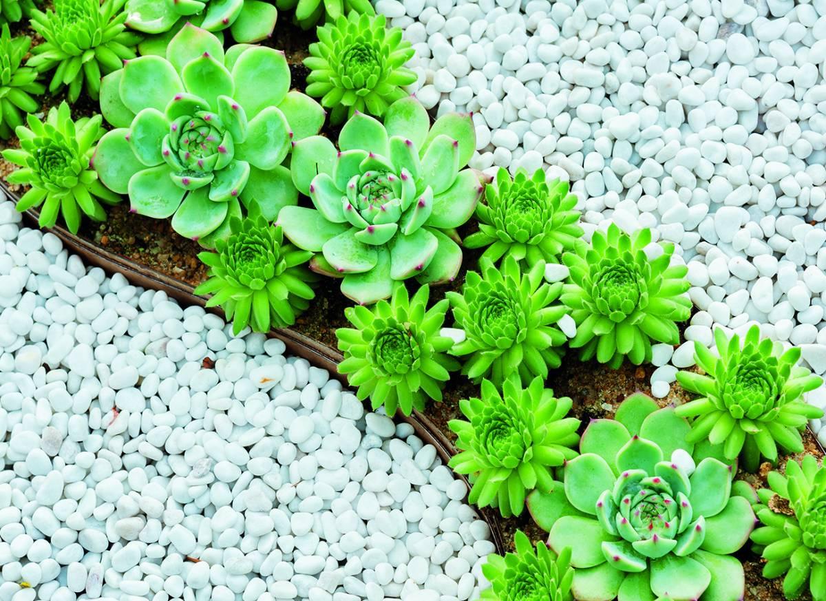 Canvas 0273 80×110 fat plants