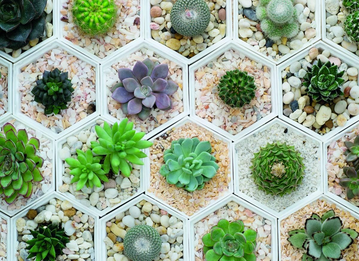 Canvas 0274 80×110 fat plants 2
